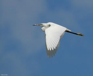 Birdwatching nella Riserva Parma morta