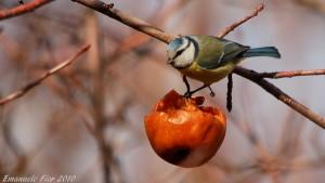 progettare e mantenere uno spazio verde a beneficio dei piccoli animali del giardino