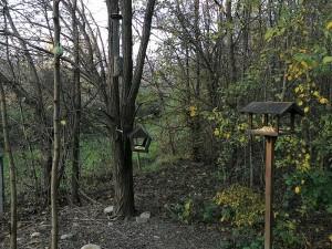 Il giardino naturalistico: ospitare piccoli animali utili e graditi