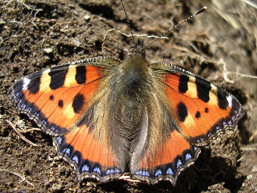 ESPERTA Srl - Corso sul riconoscimento delle farfalle presso il Parco del Taro (Collecchio), uno dei Parchi del Ducato delle province di Parma e Piacenza.