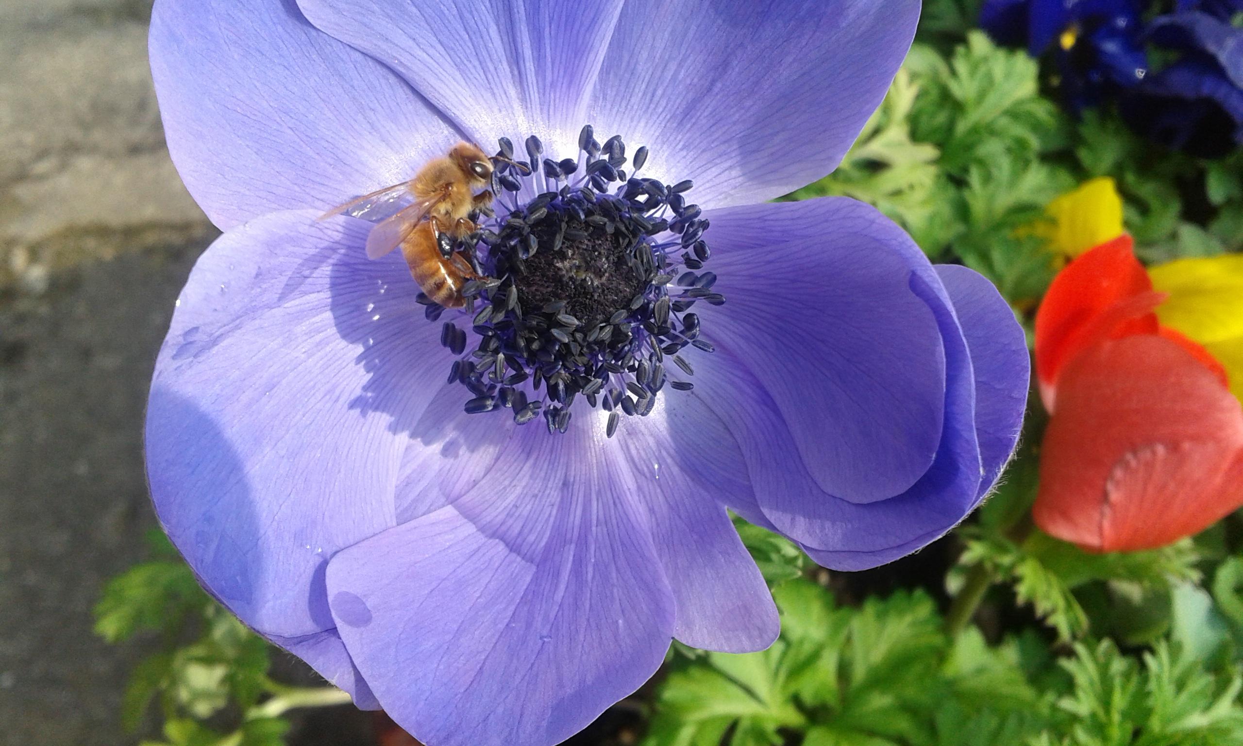 Scoprire gli insetti ed altri piccoli invertebrati - Minicorso al Parco Fluviale del Taro