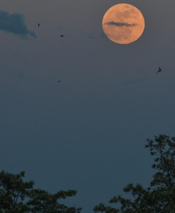 Escursione notturna al Parco Naturale Boschi di Carrega