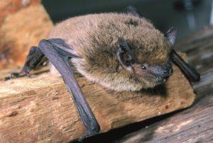 Bat night nella Riserva Naturale Parma Morta. Passeggiata notturna con un esperto di Chirotteri per ascoltare e riconoscere i pipistrelli