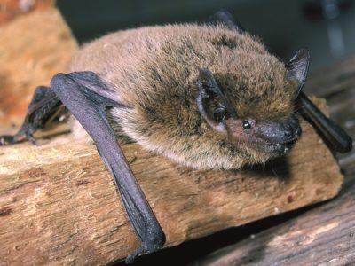 Bat night – La notte dei pipistrelli nella Riserva Naturale Parma Morta