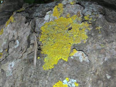 Microcosmo nel prato stabile – Riserva Naturale Parma Morta