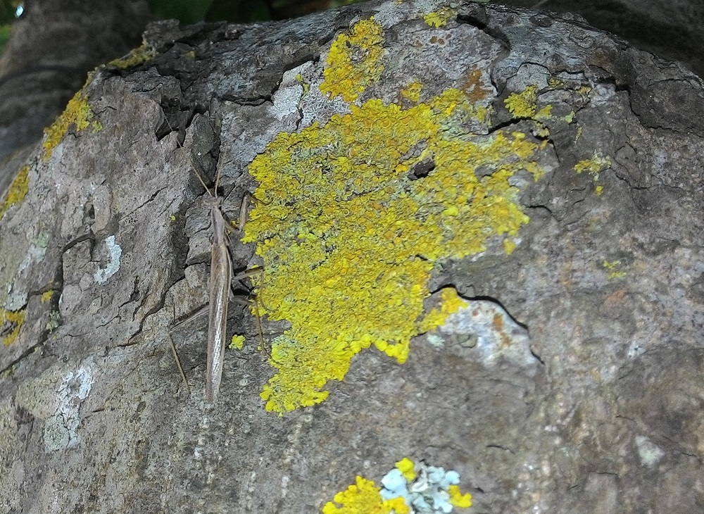 Microcosmo nel prato stabile - Scoprire e riconoscere gli invertebrati dei prati polifitici nella Riserva Naturale Parma Morta