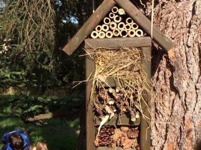 Bugs hotel – perché averlo in giardino, nell'orto o sul terrazzo di casa
