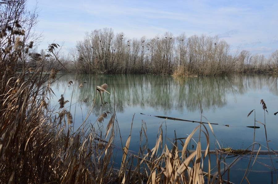 Canti di primavera: a passeggio con l'ornitologo all'Area Naturalistica Le Chiesuole