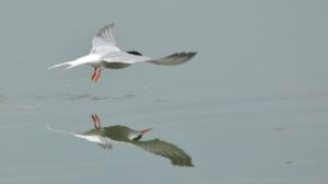 Visite guidate all'Area Naturalistica Le Chiesuole e alle voliere dei rapaci del CRAS del Parco dello Stirone e Piacenziano