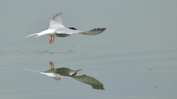 Una domenica nei Parchi del Ducato per conoscere gli uccelli
